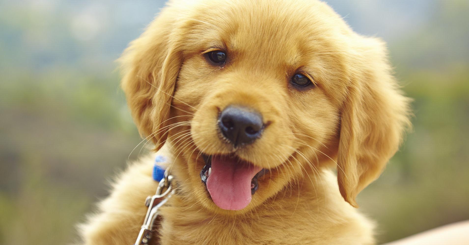Object Oriented Programming: Dogs | Make School