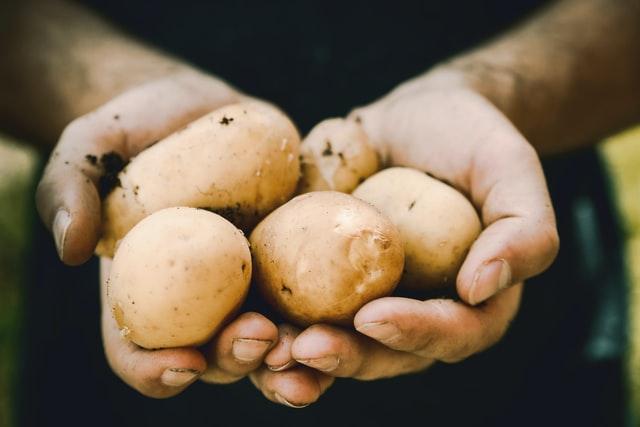 土豆也能用种子种?我国科学家研发的基因组设计马铃薯问世!