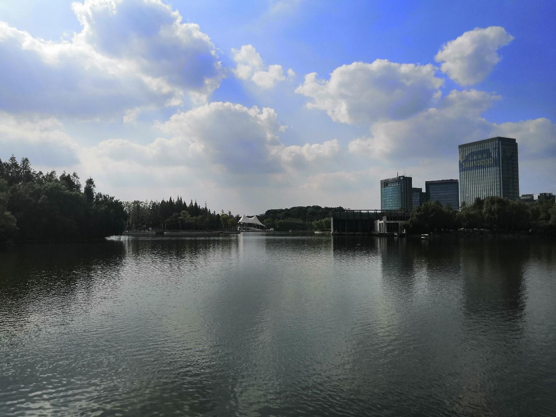 大宁郁金香公园