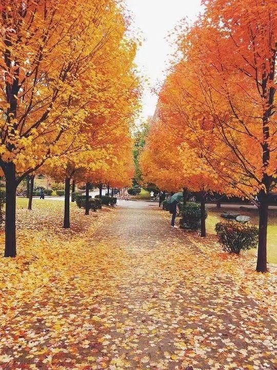 秋天的标志