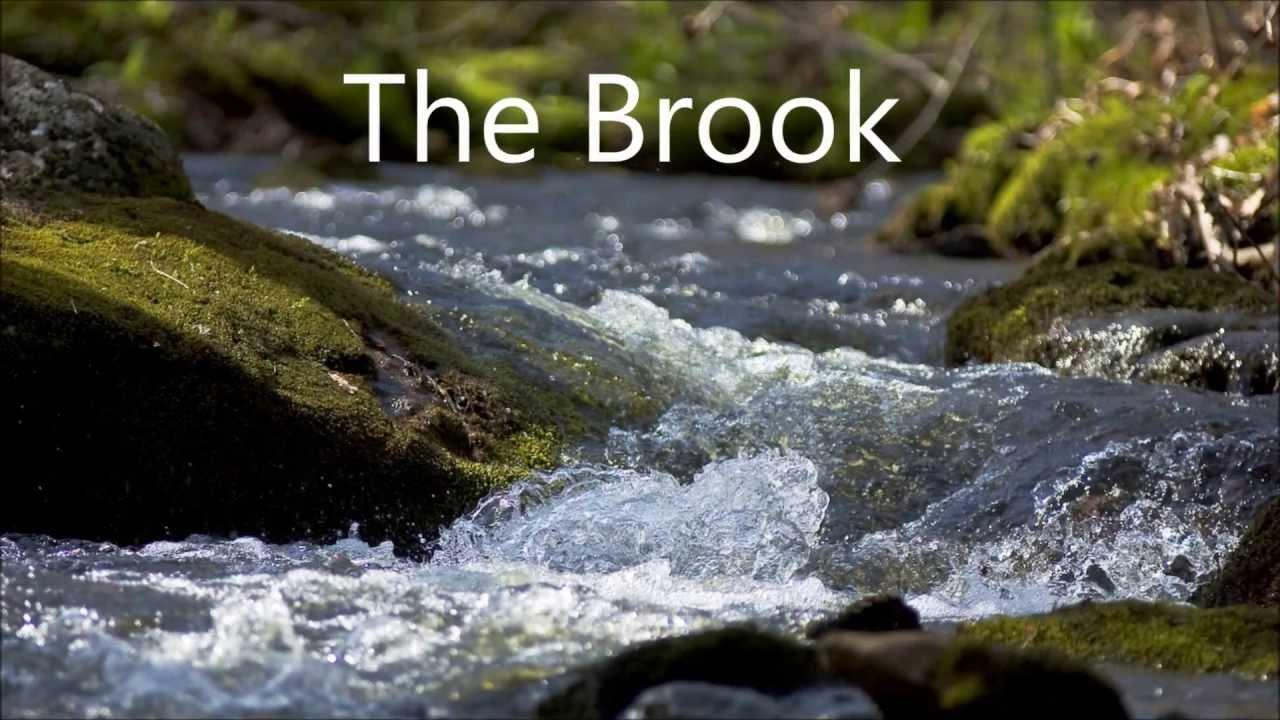 Brook服务一键搭建脚本