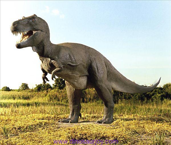 The Tyrannosaurus Rex