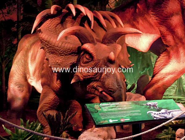 DWD1505 Albertaceratops