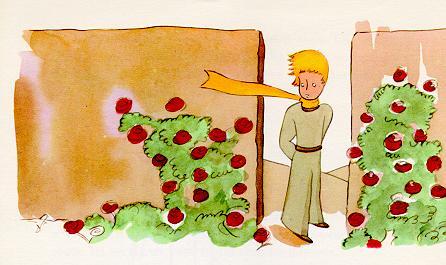 小王子-玫瑰盛开的花园