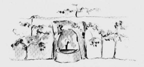 小王子-一池清泉