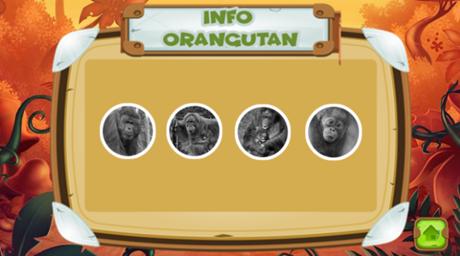 Selamatkan Orangutan - Informasi