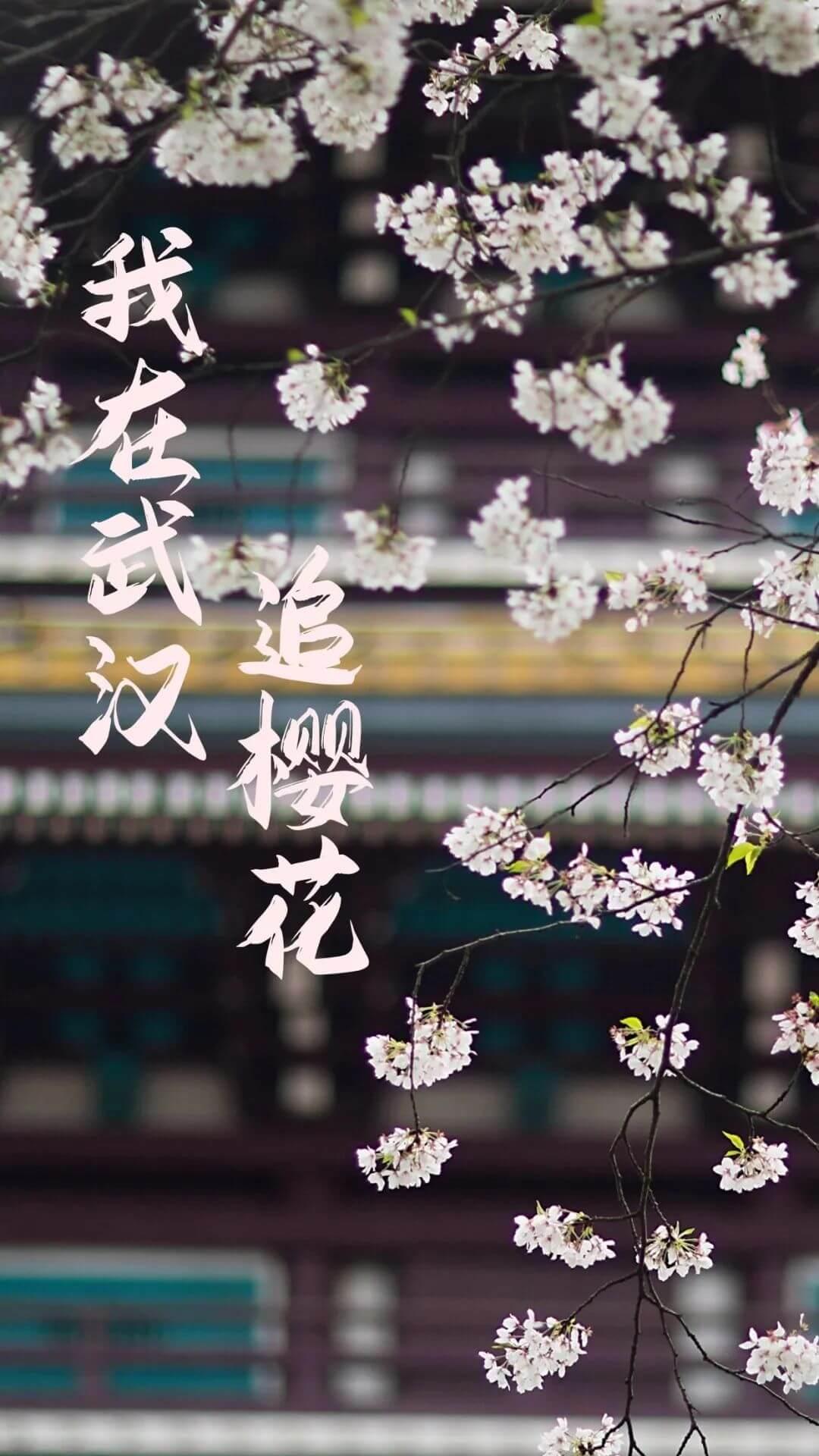还在跑遍武汉追樱花,这份武汉赏樱地图送给你-1