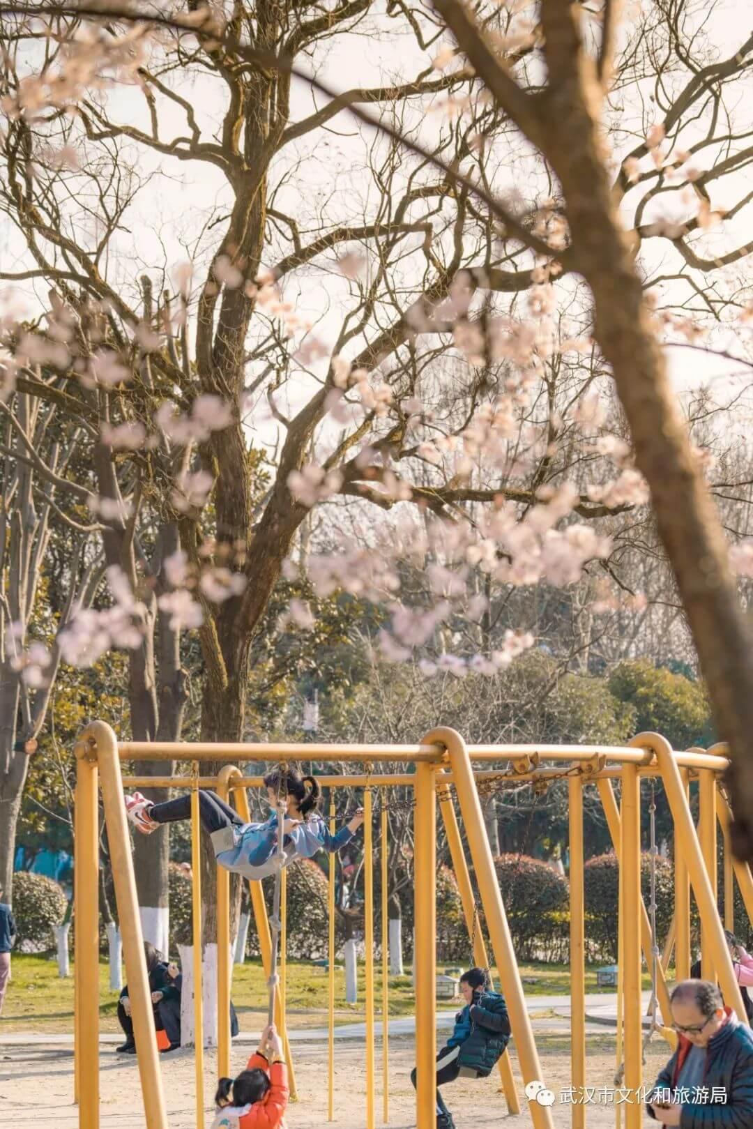 还在跑遍武汉追樱花,这份武汉赏樱地图送给你-4