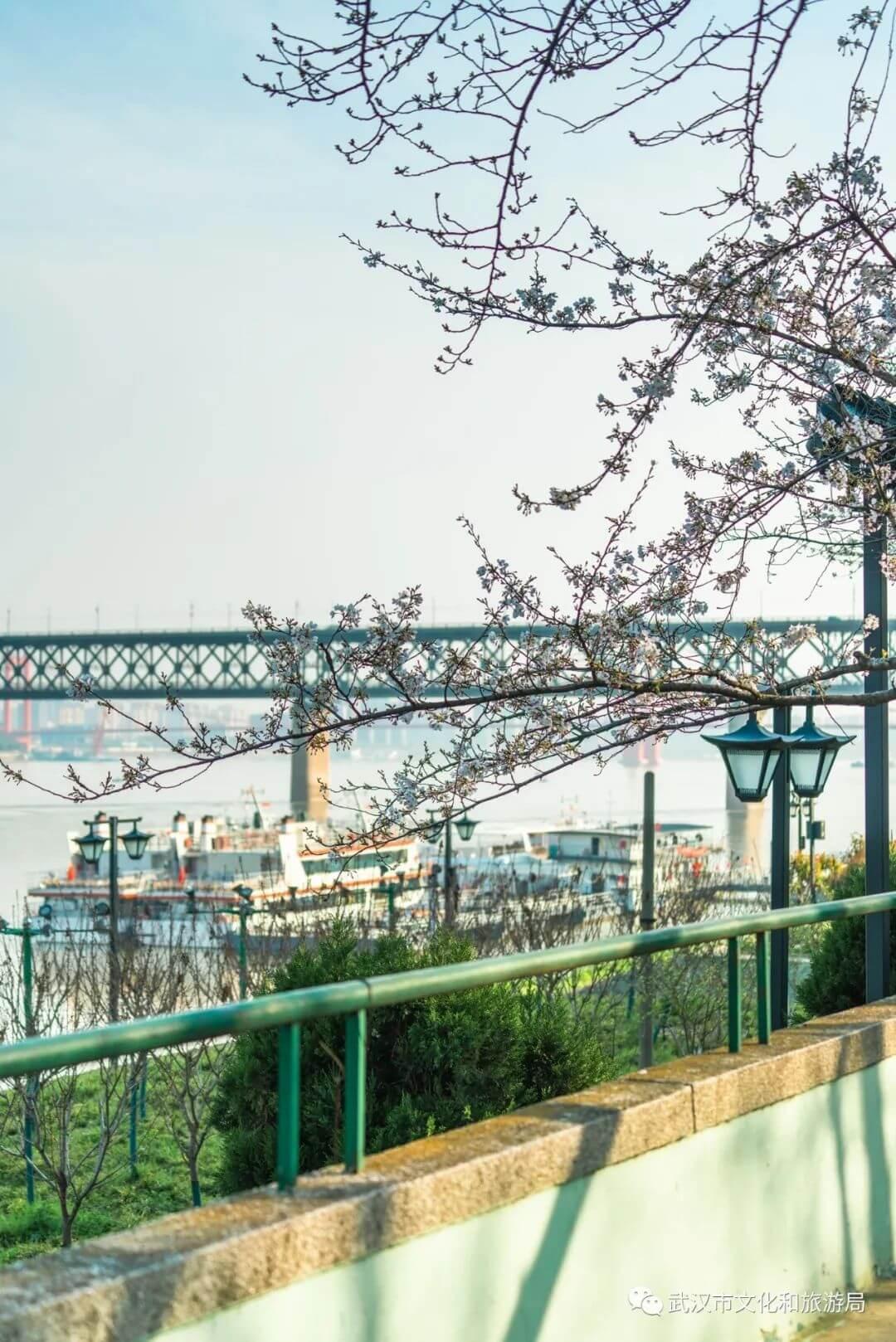 还在跑遍武汉追樱花,这份武汉赏樱地图送给你-8