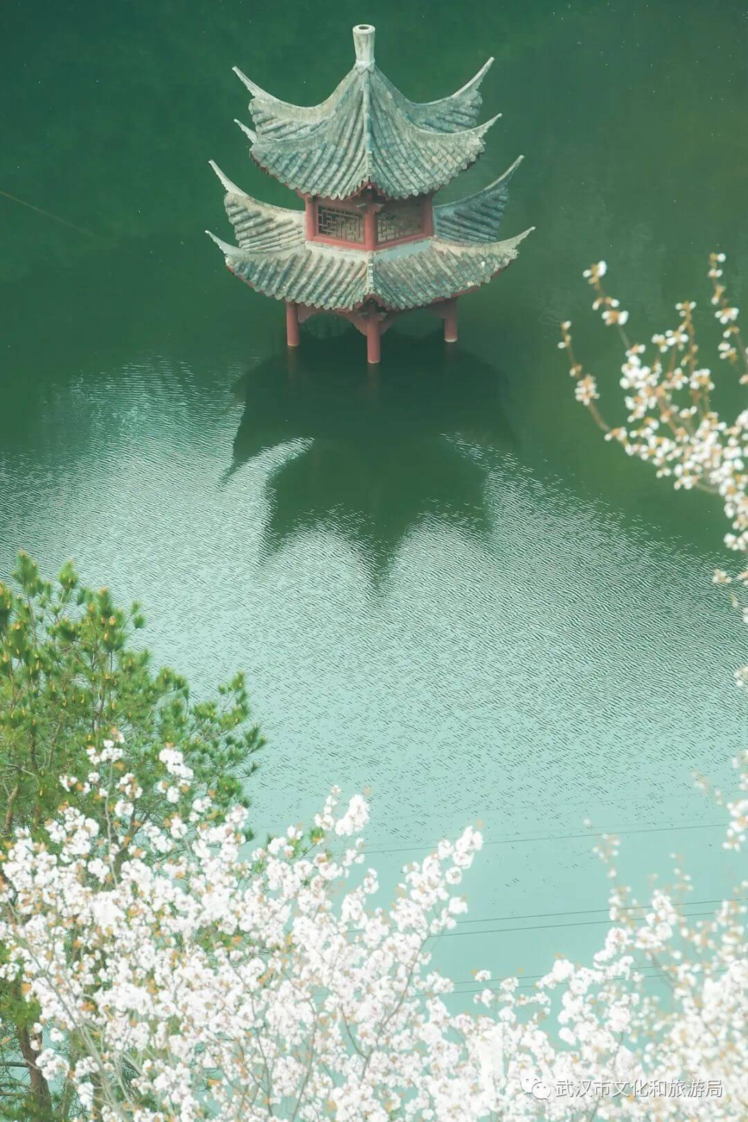 还在跑遍武汉追樱花,这份武汉赏樱地图送给你-11