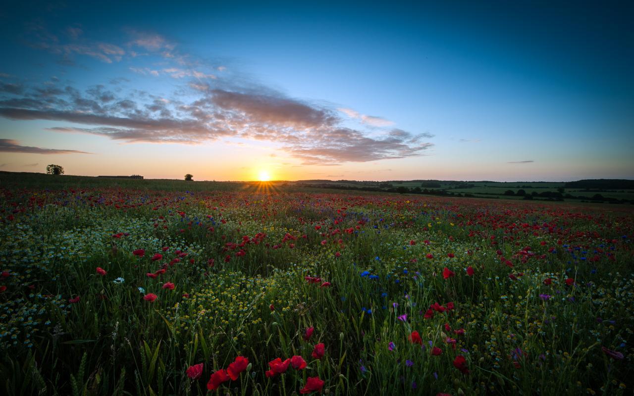 Sunrise Over The Poppy Field
