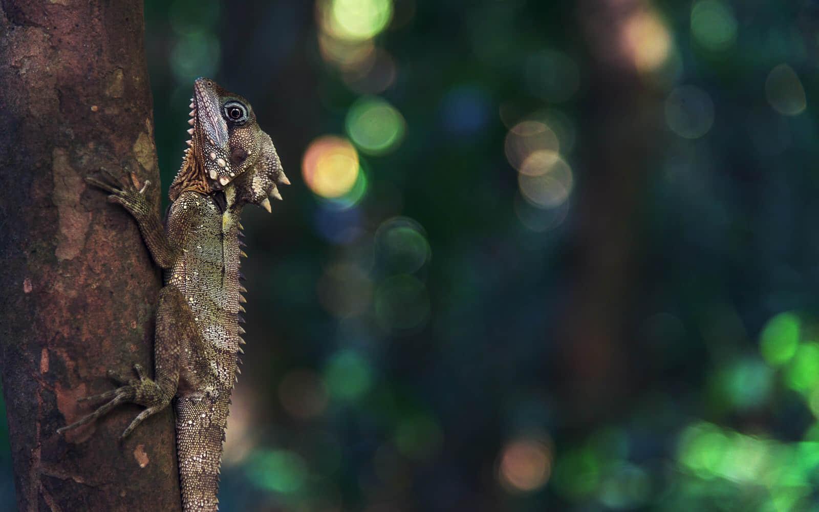 爬在树上的蜥蜴高清壁纸