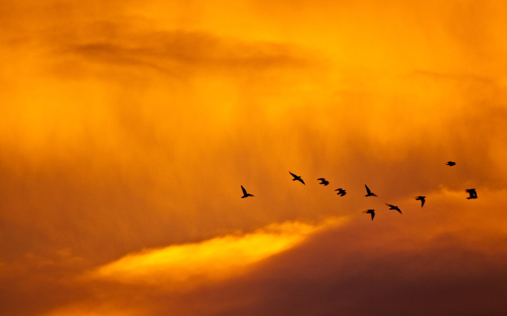 日落和鸟高清壁纸