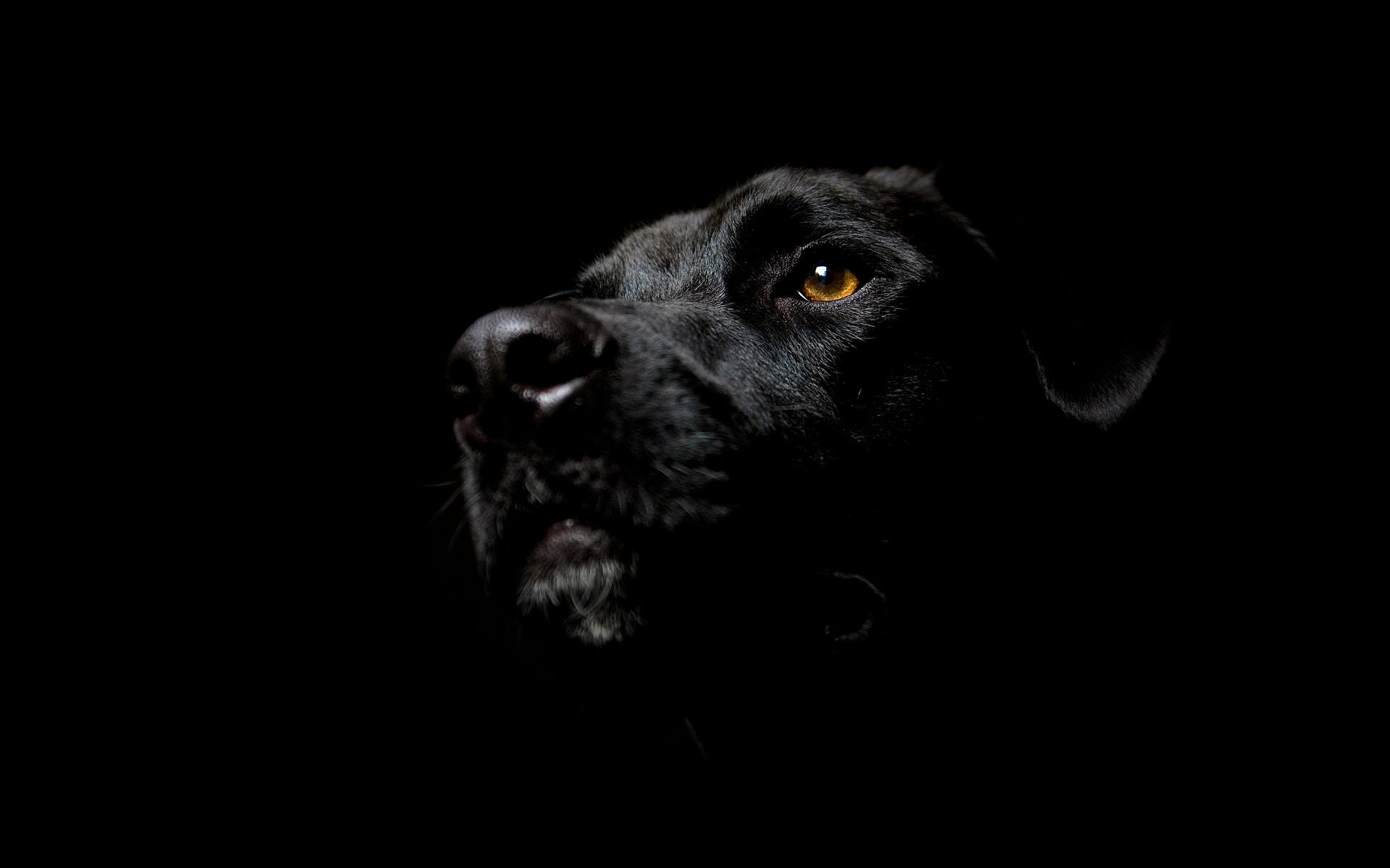 黑狗高清壁纸