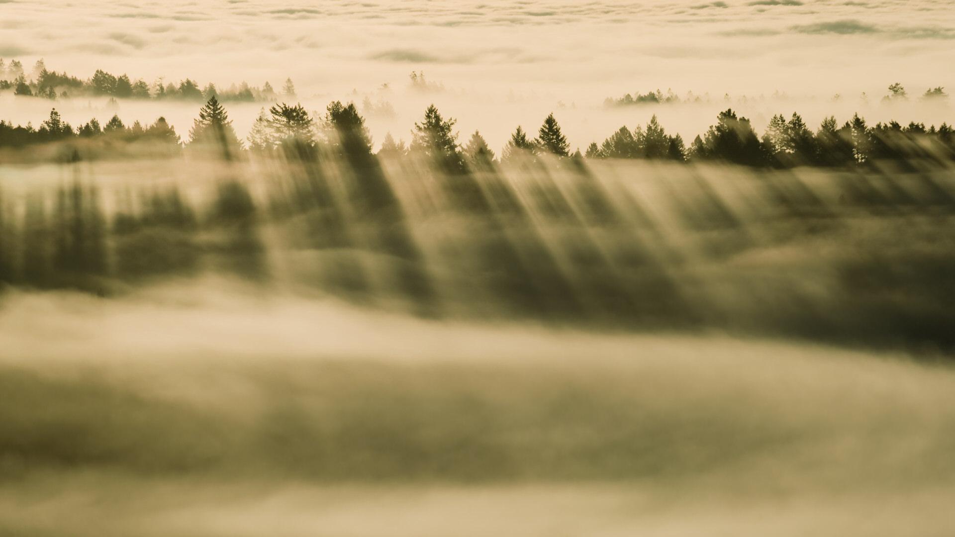 macOS Mavericks系统自带壁纸foggy-forest高清壁纸