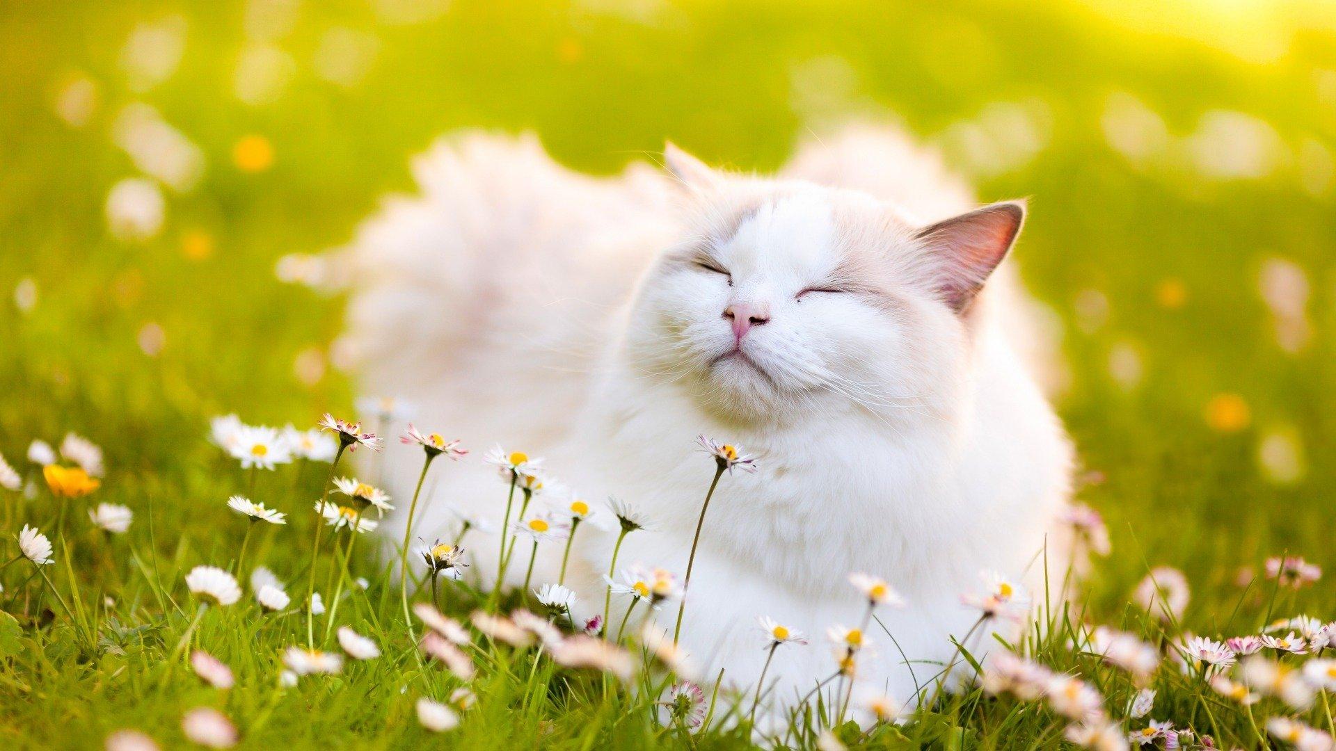 描写动物的诗句有哪些??