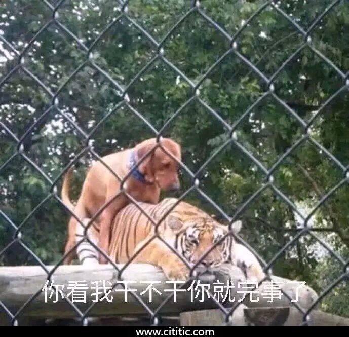 狗和老虎表情图片