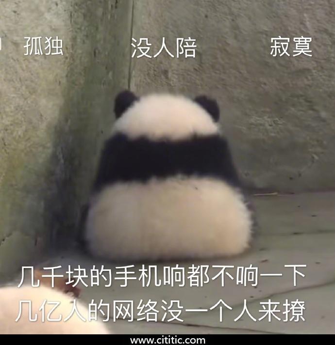孤独熊猫表情图片