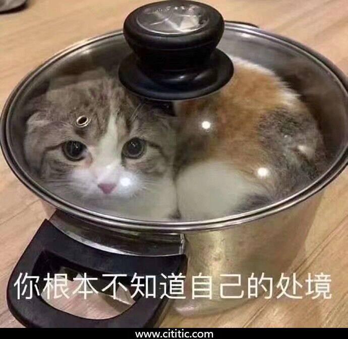锅里猫搞笑表情图片