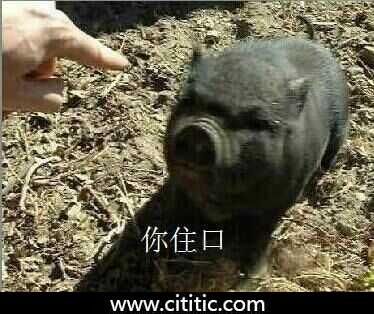 黑猪住口搞笑表情图片
