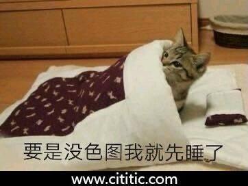 猫盖被子睡觉表情图片