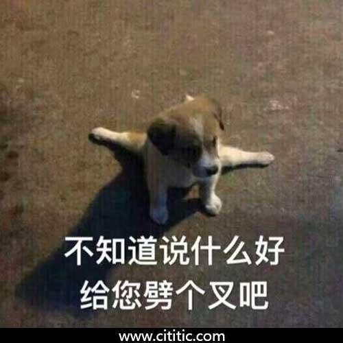 劈叉狗搞笑表情图片