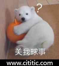 小狗熊球表情图片