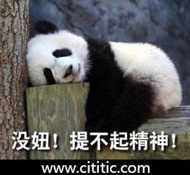 熊猫趴树桩睡觉没精神表情图片