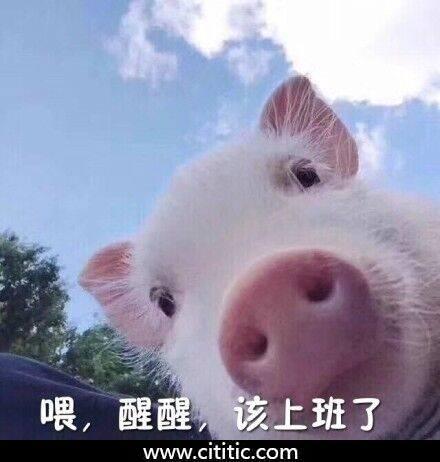 猪头鼻子醒醒表情图片
