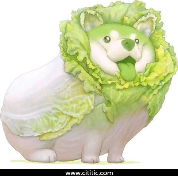 白菜狗表情图片