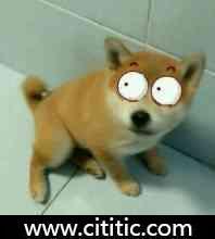 白眼狗表情图片