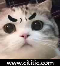 浓眉猫表情图片