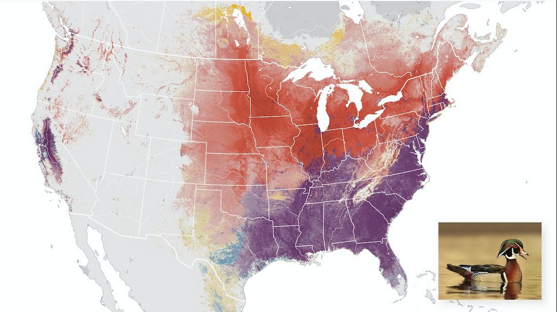 eBird提供的鸟类分布图