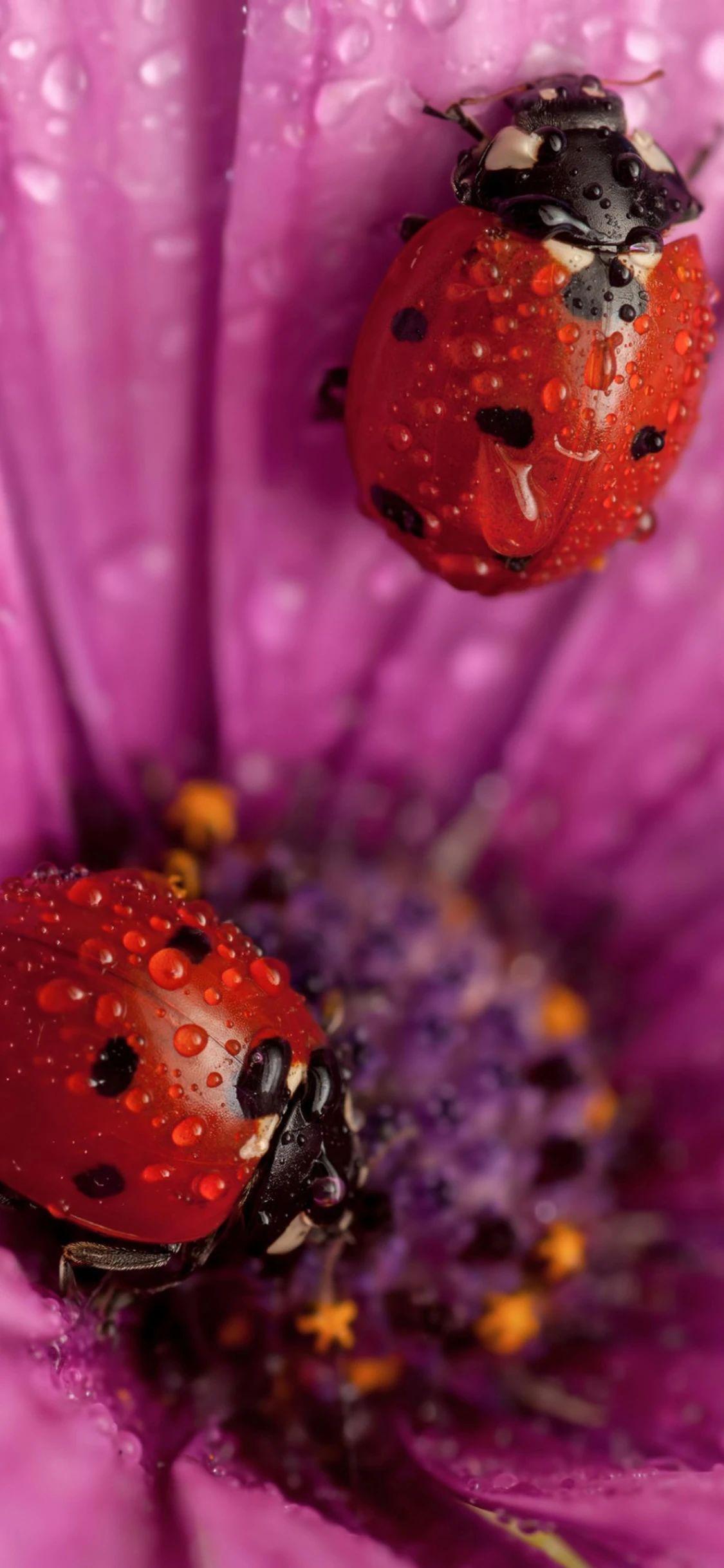 手机壁纸:蜜蜂、瓢虫、花插图3