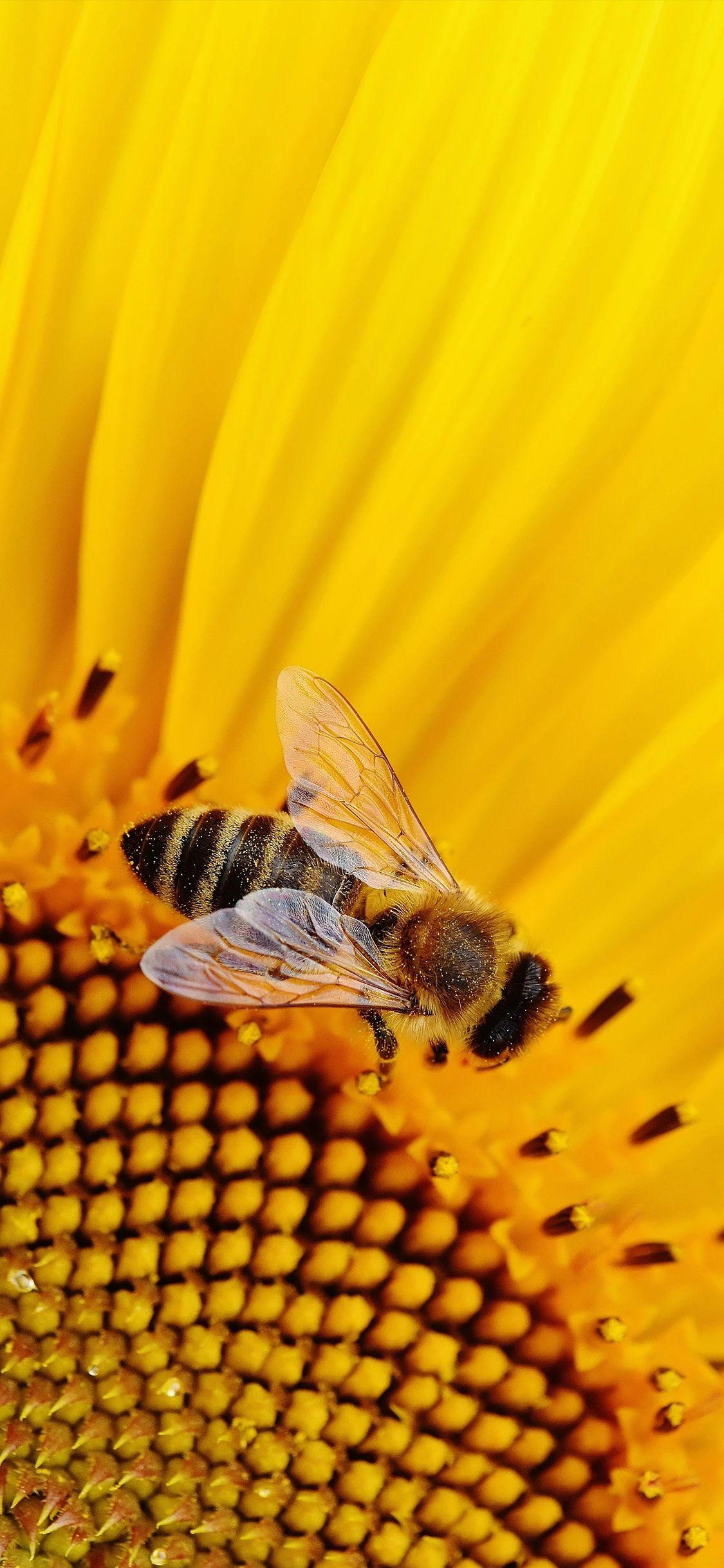 手机壁纸:蜜蜂、瓢虫、花插图9