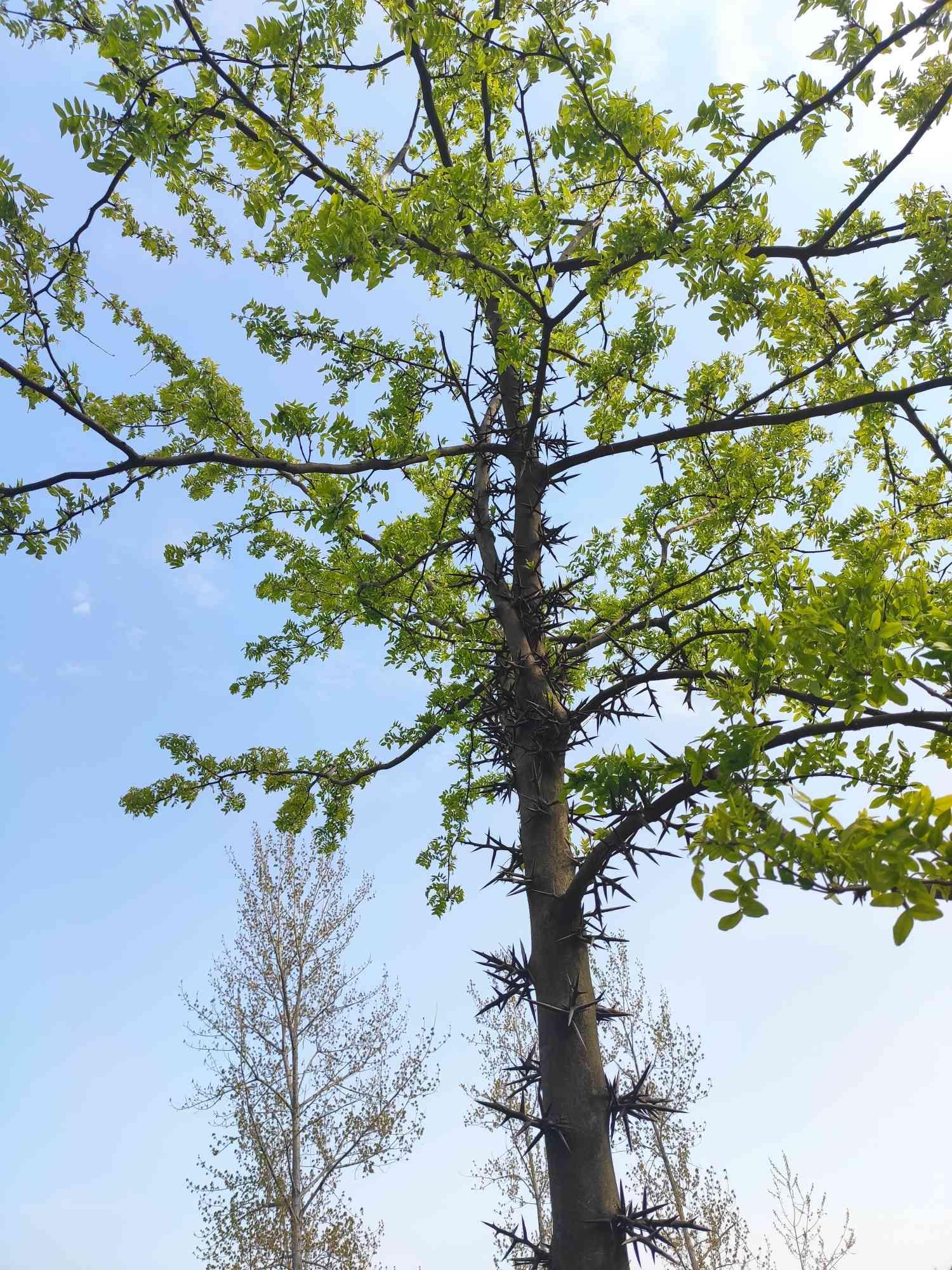 一颗长满刺的不知名小树