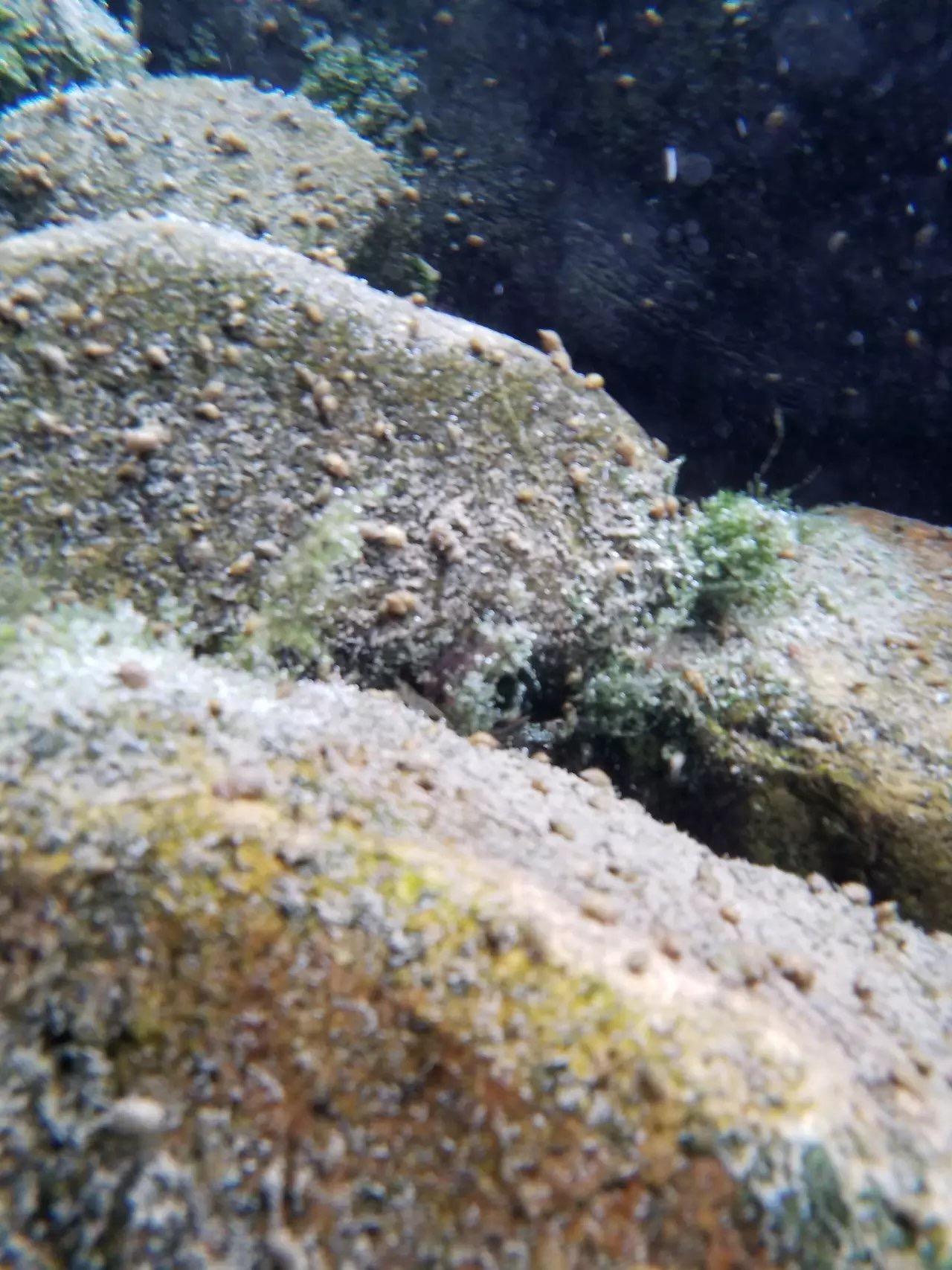 裸机水下摄影