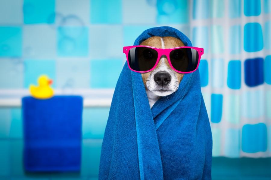 dusche reinigung einfach hund mit brille