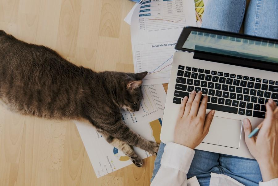 home office reinigung  unordnung frau mit katze