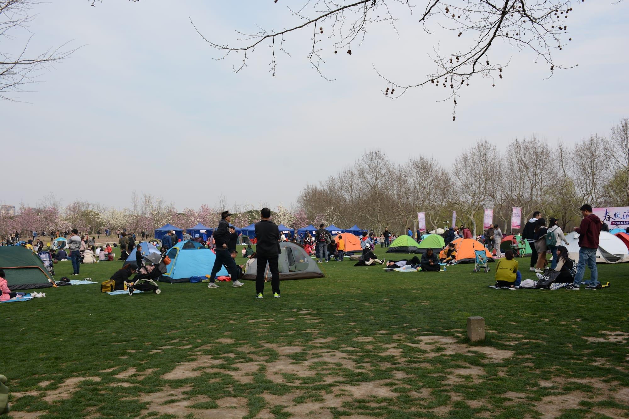 草坪上的人群