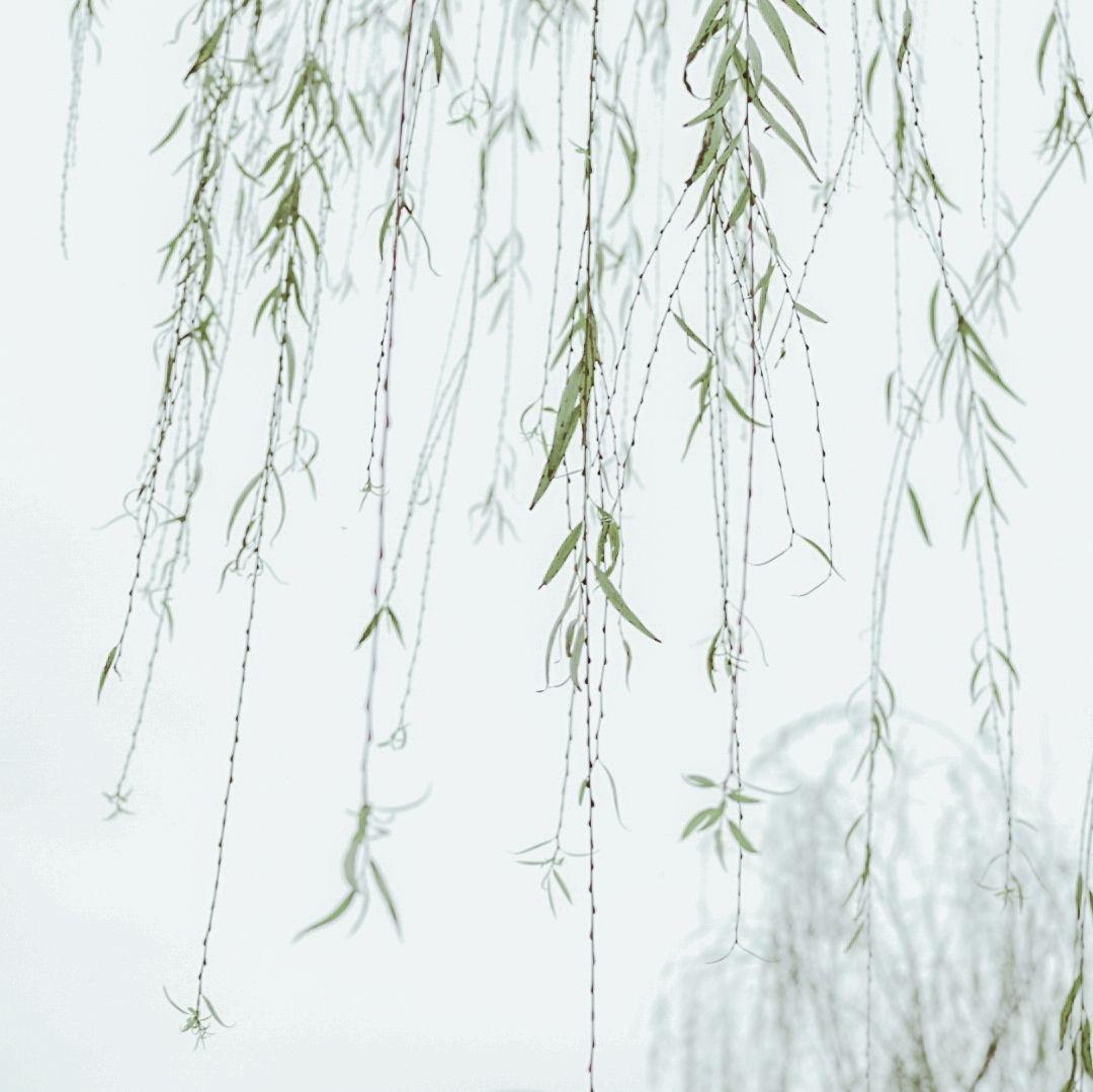 摄影-探寻阴霾下那些春色盎然的生命插图(3)