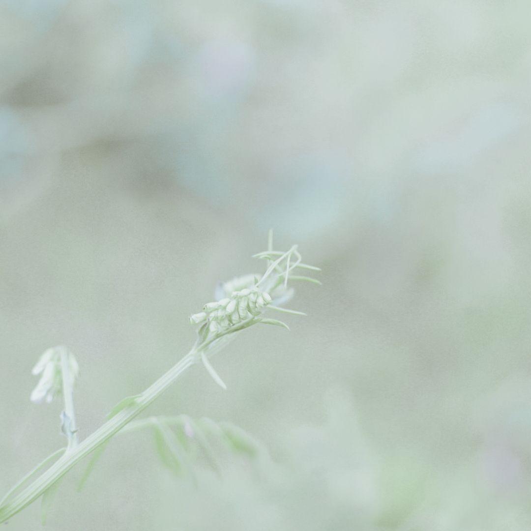 摄影-探寻阴霾下那些春色盎然的生命插图(6)