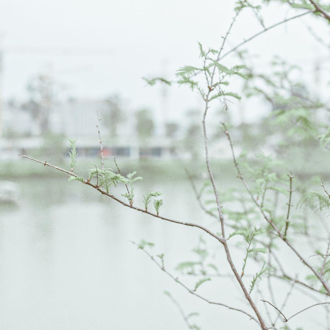 摄影-探寻阴霾下那些春色盎然的生命插图(7)