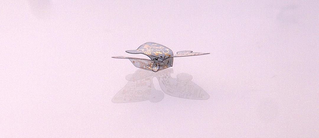 图   模仿三星果属植物种子的微型飞行器(来源:美国西北大学)