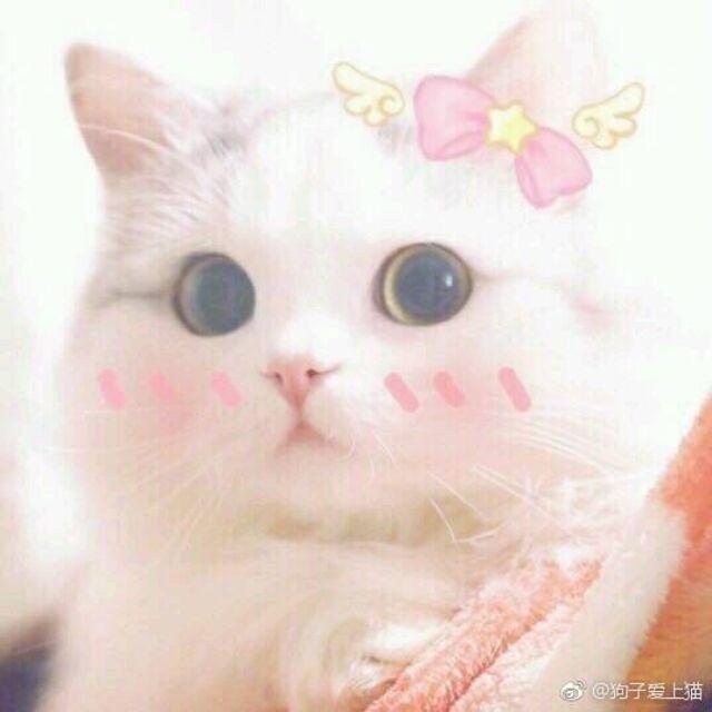 http://www.gekongfei.cn/