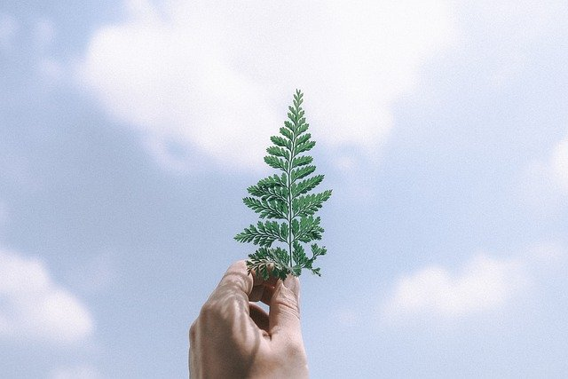 Vue封装Element ui的Tree Select树形选择器组件
