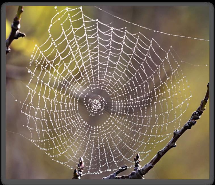 蜘蛛网的构造与等角螺线相似